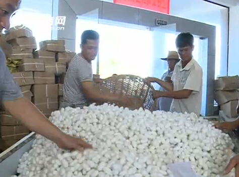 """结构,去年引进海南上谷茧丝绸有限公司,以""""公司 农户""""的模式发展种桑"""